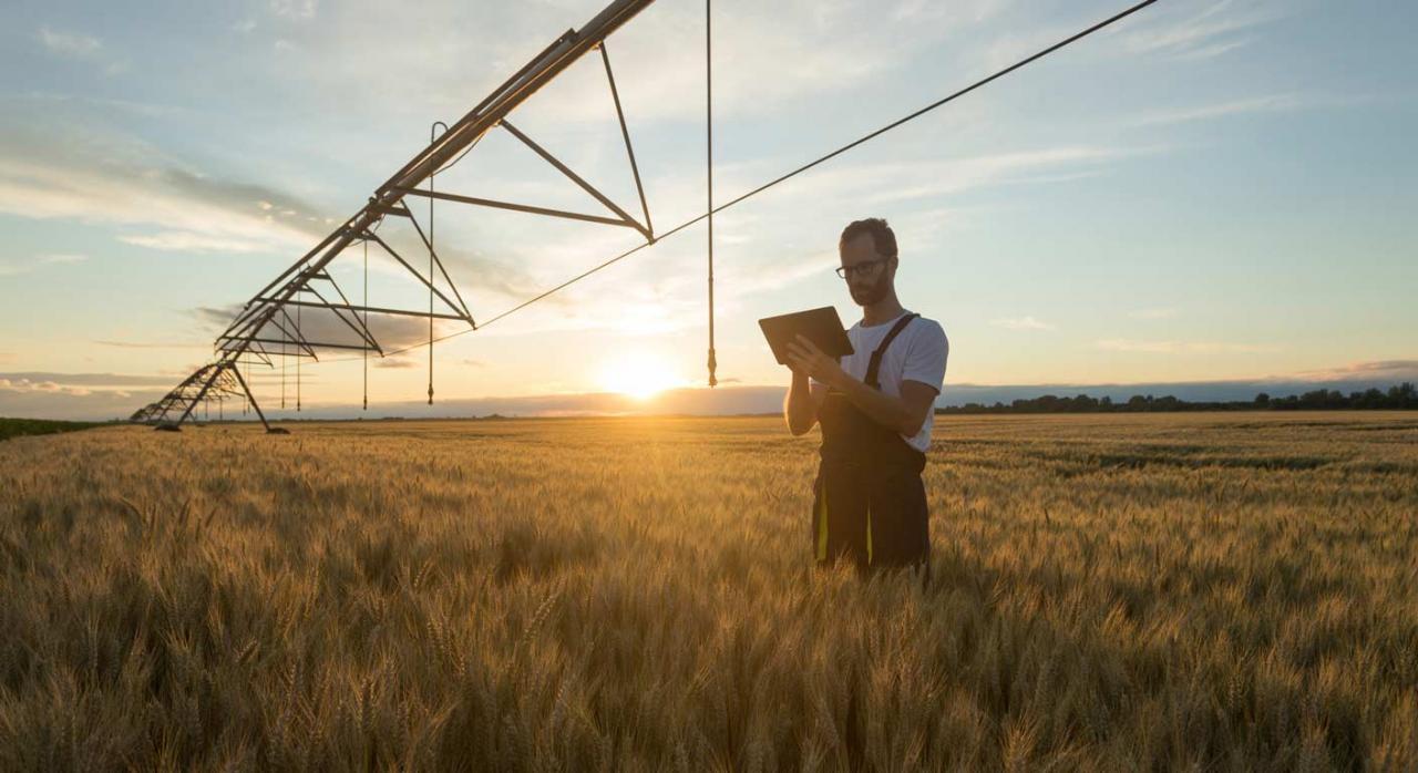 Medidas fiscales en Galicia orientadas a las actividades agrarias. Imagen de trabajador en un campo de cultivo