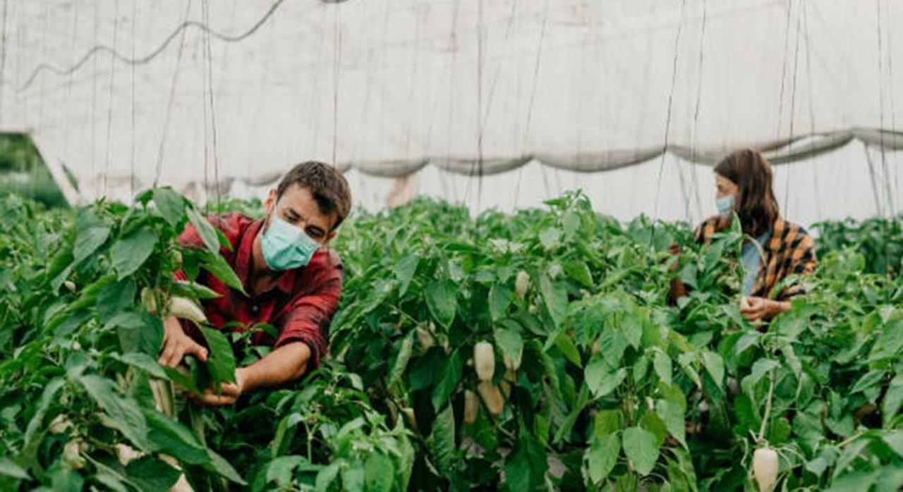 Tributación jóvenes agricultores. Imagen de agricultores